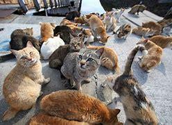 AVVISO  per colonie feline