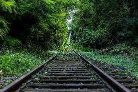Ordinanza taglio rami interferenti con rete ferroviaria