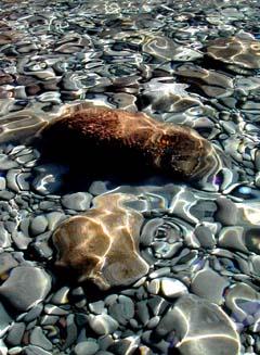 trasparenza acqua con sassi